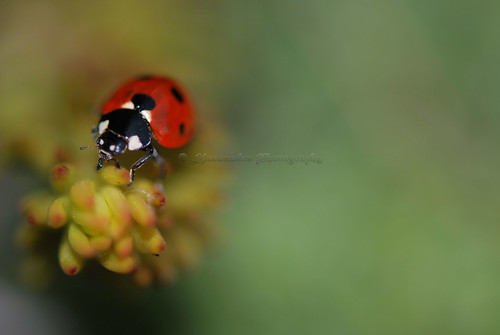the lost lady bug...
