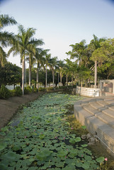 The Lotus String (hiroshiken) Tags: park plants lake flower water museum pond taiwan kaohsiung    cultural   finearts neiweipi      kfma kaohsiungcity