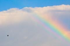 In volo verso l'arcobaleno (nelventredellabalena) Tags: yourcountry nelventredellabalena