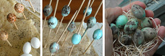 Wax Dipped Robin's Egg Beads