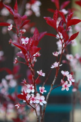 japanese-y flowers