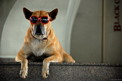 Dog chillin' with red sunglasses by rollanb
