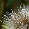 sopra agora!!! -  blow now!! (@uroraboreal) Tags: flower portugal flor vosplusbellesphotos auroraboreal1