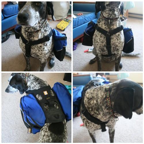 Ruffwear Dog Backpack/ Approach Pack