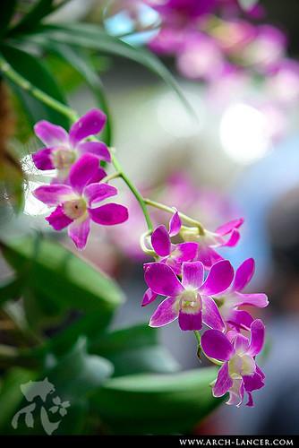 P_flower14