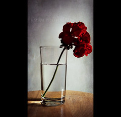 For what it's worth, (KMRM Photography) Tags: lighting flowers light sunlight motion flower love water glass field painting frozen still focus dof feel picture can more photograph simplicity than depth