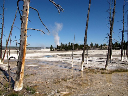 Lower Geyser Basin landscape