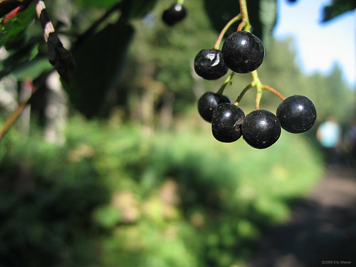 Little black berries