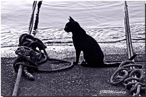 El gato y las amarras.