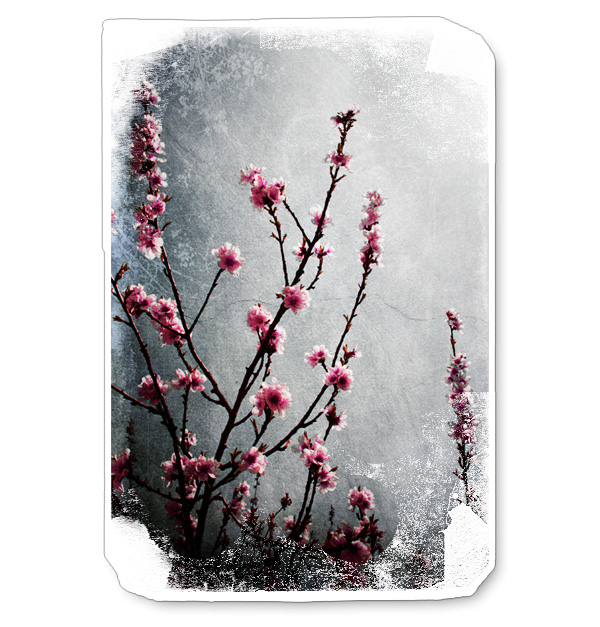 Blommande Grenar