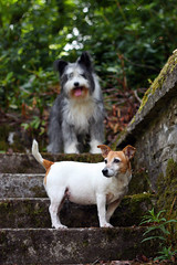 The Dogs (Abbie Lou) Tags: dogs stairs 50mm jrt trossachs beardiex scotland2010