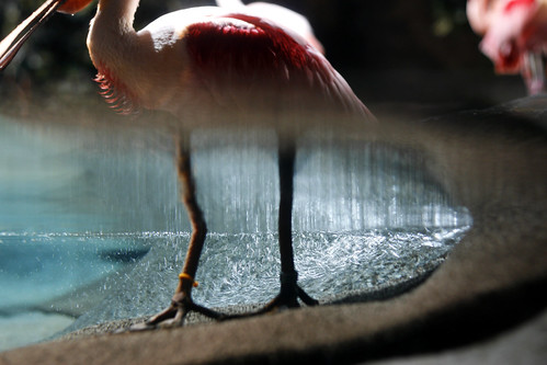 flamingo copy