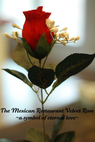Mexican Restaurant velvet rose