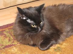 Hissy fit (martyandmaggie) Tags: catnipaddicts