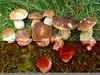 Fw: Funghi porcini  Tags : funghi-porcini-asiago
