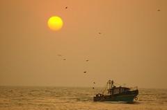 homecoming (dpk.) Tags: sunset sea sun beach boat fishing nikon cherai dpk d40 sigma70300apodg munambam deepakab pulimuttu