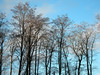 Trees at Tarradale House (IrenicRhonda) Tags: tarradale geo:lat=57506024 geo:lon=4417703 geotagged trees arch 2009 murchison roderickimpeymurchison kingofsiluria blackisle beaulyfirth pfogold tree royalgeographicalsociety president march nature scenery winner gamewinner scotland scottish highlands pregamewinner public pre game pres plant done redbubble p4m irenicrhonda insta