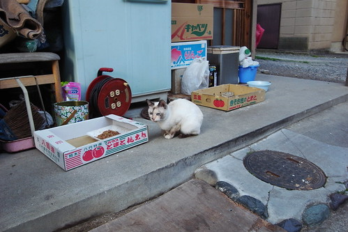 Today's Cat@20090312