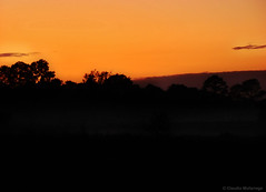 Dawning in the fog / Amanecer en la niebla (Claudio.Ar) Tags: trees naturaleza santafe color nature topf25 argentina fog sunrise árboles sony silhouettes amanecer dawning niebla siluetas dsc pampa h9 blueribbonwinner worldbest anawesomeshot colorphotoaward amazingamateur goldsealofquality betterthangood dazzlingshots proudshopper theperfectphotographer landscapesdreams multimegashot theenchantedcarousel specialpictures claudioar claudiomufarrege goldenart artofimages novavitanewlife sensationalphoto themonalisasmile imagesforthelittleprince musicsbest dragonsdanger phoebsfrontpage daarklands