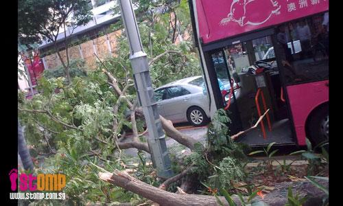 Big tree falls, damages vehicles in Orchard Rd