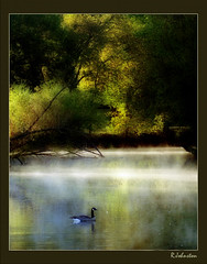 Morning mist (tawnytanner) Tags: park morning mist fog canadian goose islandpark