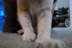 Rawr (Mary Lindsay) Tags: cat nibbler