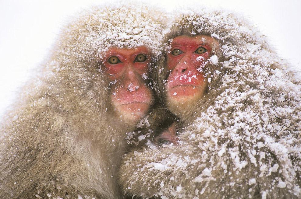 одессе картинки с шутками про зиму сладкие