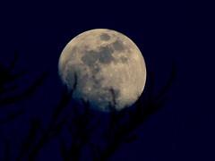 [フリー画像] 自然・風景, 月, 夜空, 201006032300