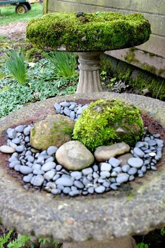 Oregon Spring = moss