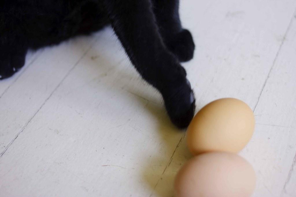 mojo tapping eggs