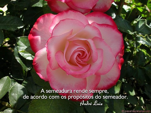 """""""Semeadura"""" - André Luiz por Instituto André Luiz."""