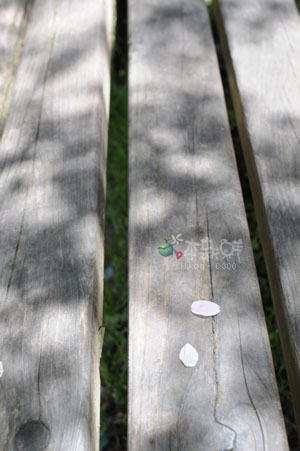 宇治‧長凳上的花瓣