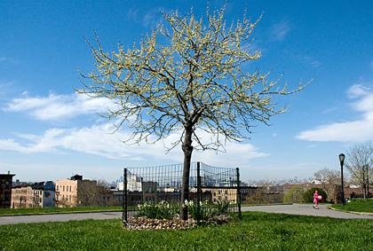 TreePinkGirlBlog