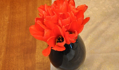 tulips from our garden