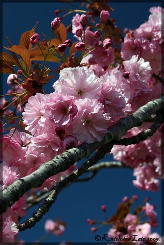 kukkia puissa 2