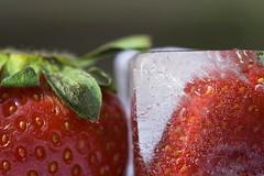 Estateinverno (esci_le_foto) Tags: red verde green ice fruit strawberries rosso frutta ghiaccio fragole fotolia provaobiettivo
