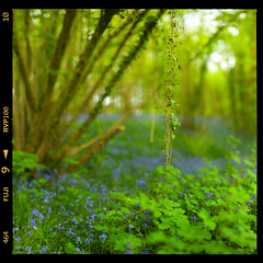 Magical Place (28mm f/0.8) (Edd Noble) Tags: trees autostitch green forest photoshop nikon colours f14 85mm saturation nikkor d3 multiplephotos 36photos brenizermethod hasselbladborder stitchedfrom36images