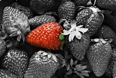 Strawberry (alegrias del incendio) Tags: blackandwhite color macro blancoynegro strawberry strawberries fresa