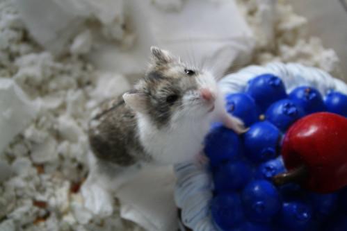The Secret Hamster