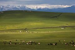 Xinjiang:kalajun grassland (woOoly) Tags: china flowers spring chinese xinjiang prairie   kazakh ili yili zhongguo sinkiang  alpinegrassland 5dmarkii   kalajungrassland gettyimageschinaq12012 ilichina tekesi kalajunprairie