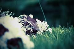 Bouqeh 2 (Nathaniel KS) Tags: flowers wedding color love grass contrast bokeh saturation bouquet foreground
