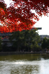 IMG_1023 (Ryohei_M) Tags: plant japan canon canoneoskissx2