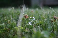 Bubble (23/365) (S Bavido) Tags: green grass outside outdoors inspired naturallight bubble naturallighting sooc richardheeks