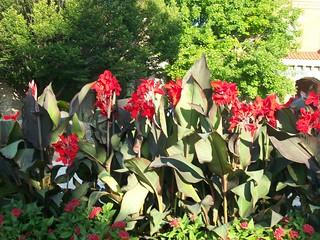 Toledo Zoo Flowers