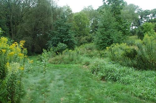 Grassy Path, Brine Garden