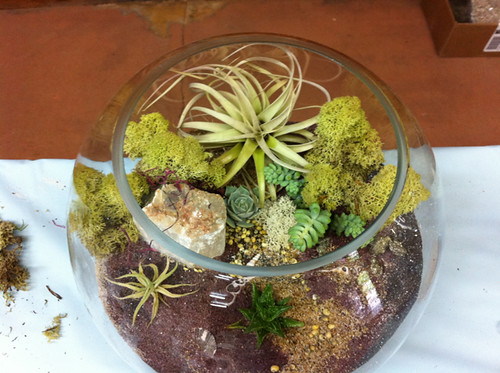 Amy's terrarium from her book event