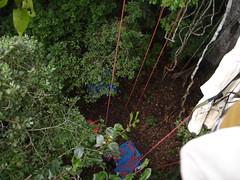 Amaznia - Expedio (Clube do Turismo) Tags: expedio rionegro amaznia jumalodge junglepalace ariatowers riosolimes encontrodaguas novoair escaladaemrvore