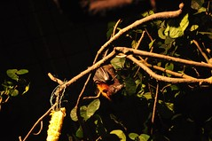 Night Safari 2009 (rkriszsingaporee) Tags: singapore nightsafari
