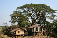 Village near Myitkyina (florian_grupp) Tags: from wood blue sky house building tree rural train asia southeastasia village burma traditional railway journey myanmar southeast birma mandalay hugetree myitkyina kachin kachinstate