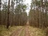 macchia boschiva